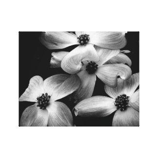 Black and White Dogwood Flower Canvas