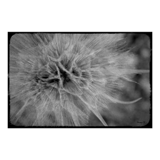 Black and White Feathery Weed Poster