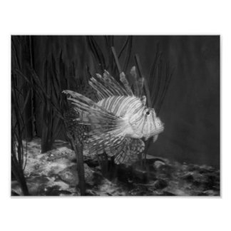 Black And White Fish Photograph Poster