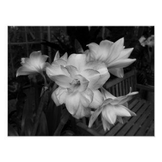 Black And White Floral Photograph Poster