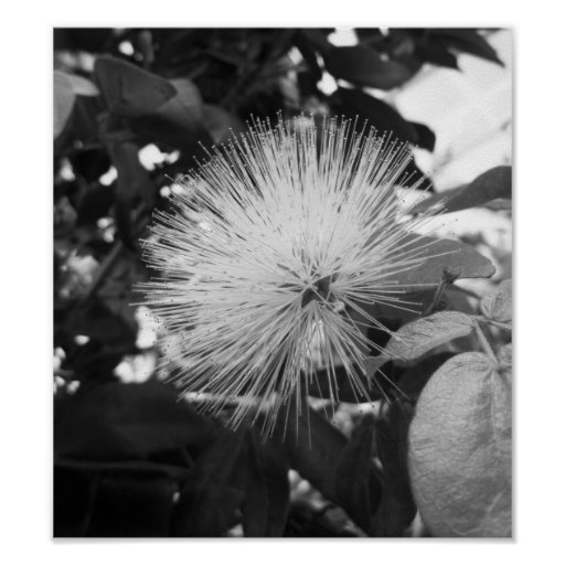 Black And White Floral Photography Poster