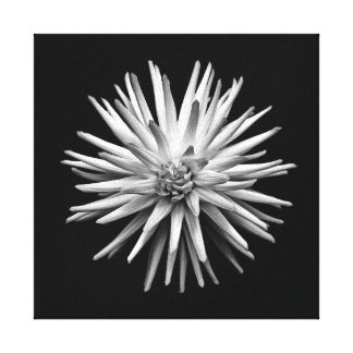 Black and White flower Stretched Canvas Print