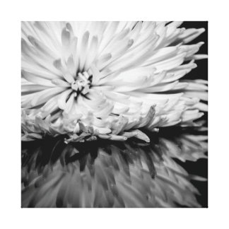 Black and White Flower Photo Gallery Wrapped Canvas