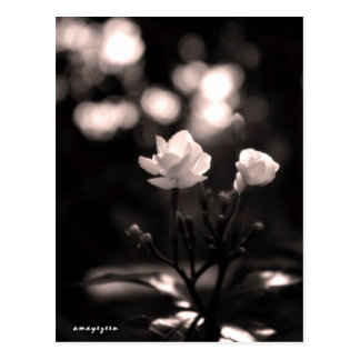 Black and white flower with bokeh postcard