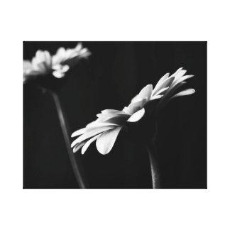 Black and White Gerbera Canvas Print