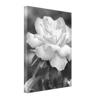 Black and White Glowing Rose Photographic Art Canvas Print