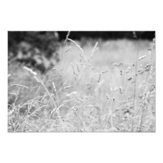 Black and White Grass Photo Print