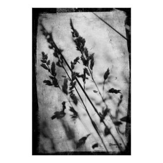 Black and White Grass Poster
