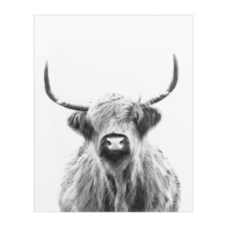 Black and White Highland Cow Acrylic Wall Art