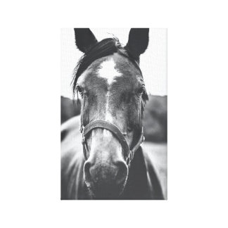 Black and White Horse Portrait Photo Canvas Print