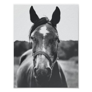 Black and White Horse Portrait Photo Poster