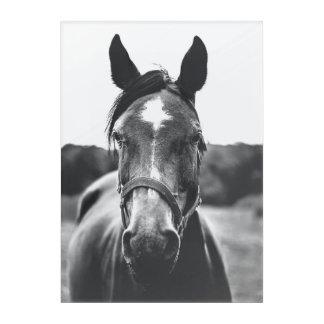 Black and White Horse Portrait Photo Print