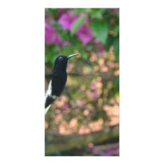 Black and White hummingbird flying at a feeder Personalized Photo Card