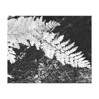 Black and white Japanese fern on log Canvas Print