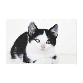 Black and White Kitten Canvas Print