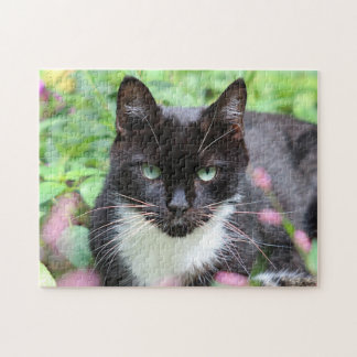Black and white kitty in the garden jigsaw puzzle