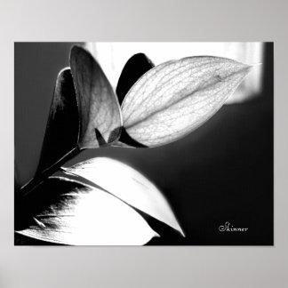 Black and White Leaves-Left Poster