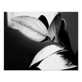 Black and White Leaves-Right Poster