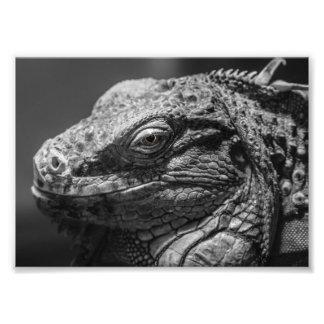 Black and White Lizard Art Photo