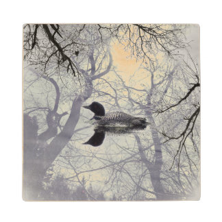 Black and white loon on a lake      wood coaster