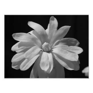 Black and White Magnolia Centennial Poster