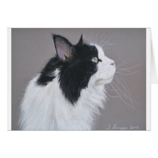 Black and White Maine Coon cat. Card