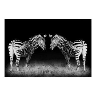 Black and white mirrored zebras poster