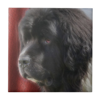 Black And White Newfoundland Dog Small Square Tile