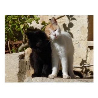 Black and white-orange cute kittens postcard