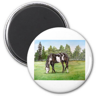 Black and White Paint horse/pony grazing in field 6 Cm Round Magnet