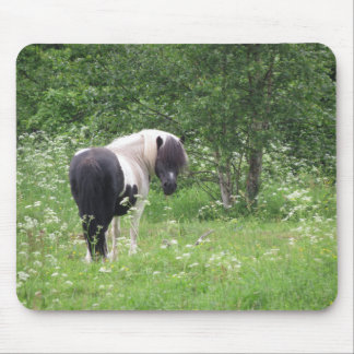Black and White Paint Pony in Wildflower Meadow Mousepads