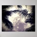 Black and White Palm Tree Beach Decor Photo