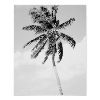 Black and white palm tree beach photo poster