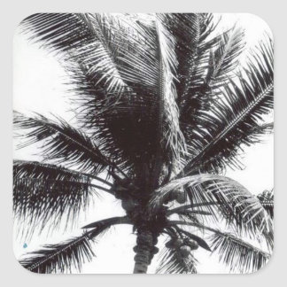Black and White Palm Tree Sticker