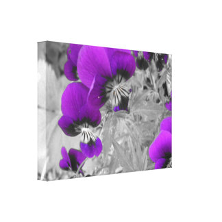 Black and White Pansy Effect Canvas Print