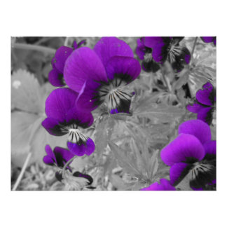 Black and White Pansy Effect Poster
