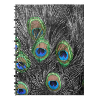 Black and White Peacock Feather Spiral Notebooks