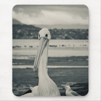Black and White Pelican Photograph Mouse Pad