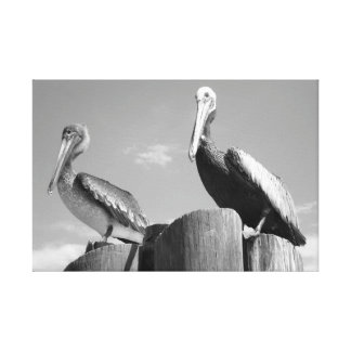 Black and White Pelicans Canvas Print