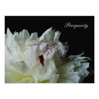 Black and White Peony Poster