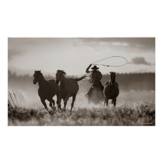 Black and White photo of a Cowboy Lassoing Horses Poster