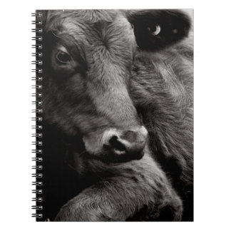 Black and White Photo of Black Angus Steer Notebooks