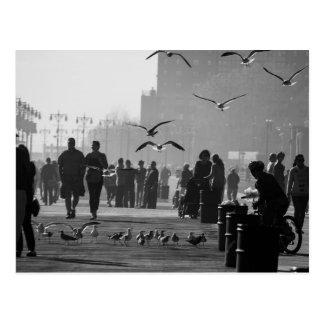 Black and White Photo of Coney Island Boardwalk Postcard