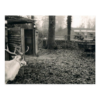Black and white photo of reindeer and sleigh postcard