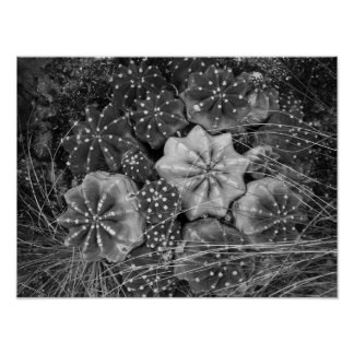 Black And White Photography Cactus Poster