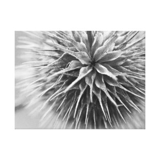 Black and white photography floral gallery wrapped canvas