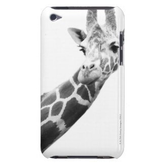 Black and white portrait of a giraffe barely there iPod case