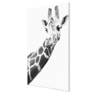 Black and white portrait of a giraffe stretched canvas print