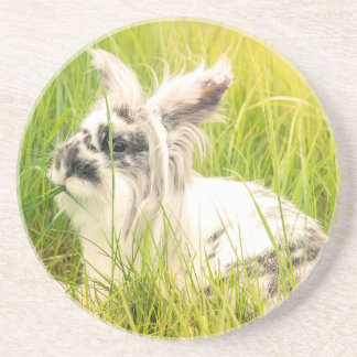 Black and white rabbit coaster