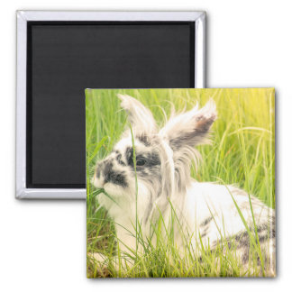 Black and white rabbit magnet